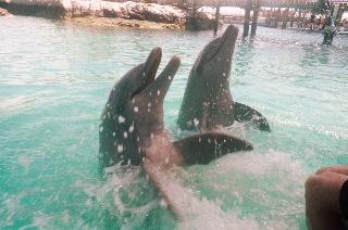 Dolphins in Nassau