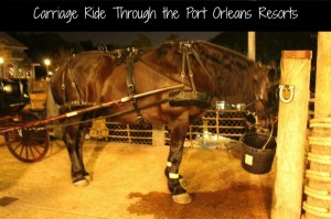 Carriage ride at Port Orleans