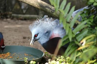 Birds at Animal Kingdom