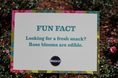 Fun facts and interesting information can be found throughout the festival.