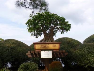 Flower and Garden Festival Bonsai Tree