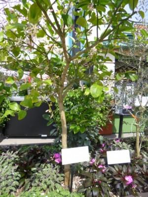Flower and Garden Outdoor Kitchens (3)