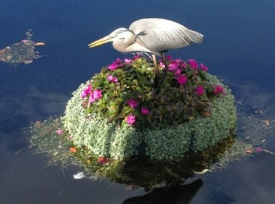 Heron resting on a Floating Garden