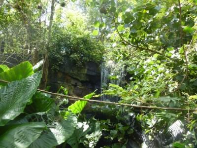 Pangani Bird Aviary 2