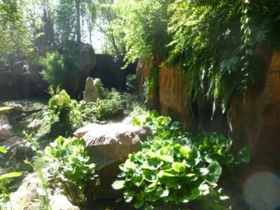 maharajah foliage 2