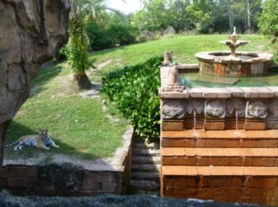 maharajah tiger water