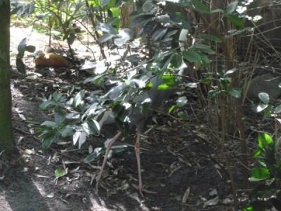 maharajah trail 3