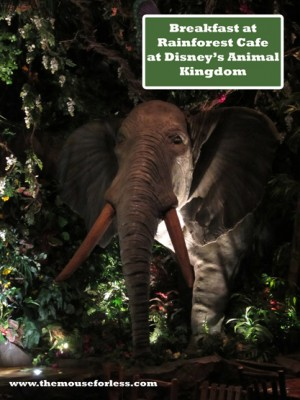 Breakfast at Rainforest Cafe at Disney's Animal Kingdom