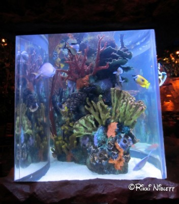 Rainforest Cafe Aquarium