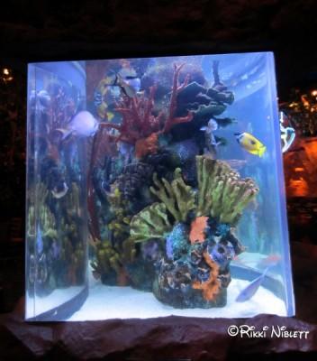 Rainforest Cafe Aquarium