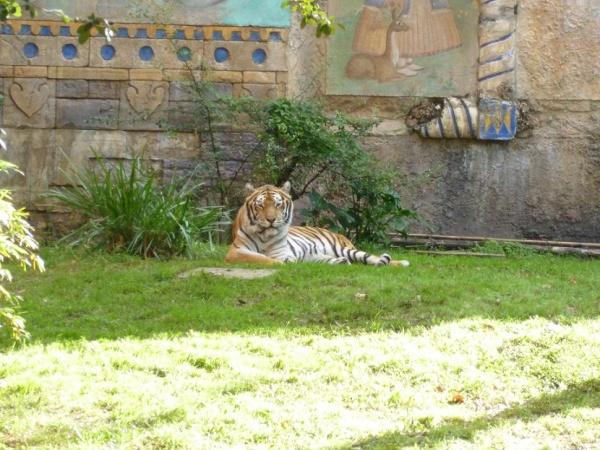 Tiger Maharajah