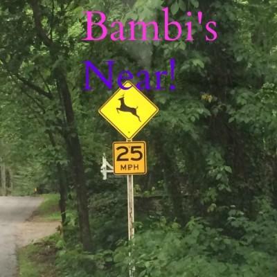 Bambi Deer Use