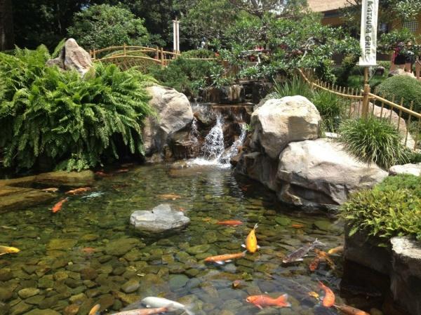 Katsura Koi Pond
