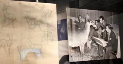 Bambi drawings