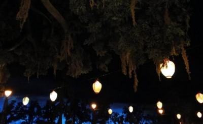 The Blue Bayou