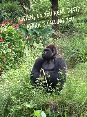 AK Gorilla Pagani title pic