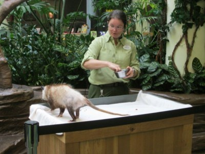 Conservation Station encounters