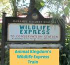 Wildlife Express Sign