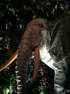 RC Elephant