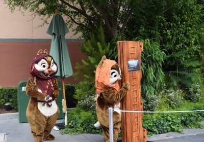 tim sww15 chip dale play