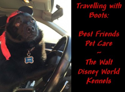 Traveling with boots best friends pet care at walt disney for Pet boarding near disney world