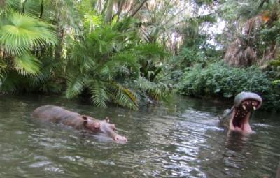 MFL Jungle Hippo