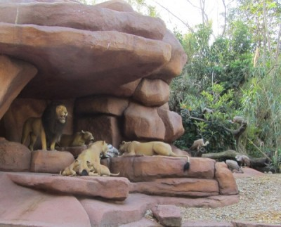 MFL Jungle Lion