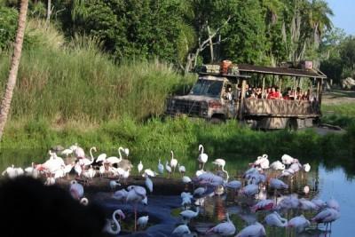 AK Safari tour2