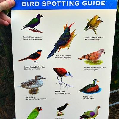 Gorilla Falls - Bird Spotting Guide