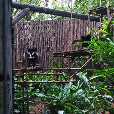 Gorilla Falls Exploration Trail - Colobus Monkey