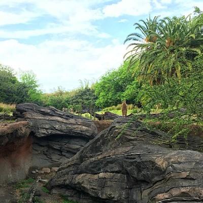 Gorilla Falls - Meerkat