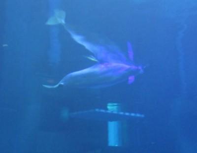 MFL Tues Dolphin
