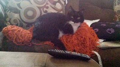 Merida Wig with Cat