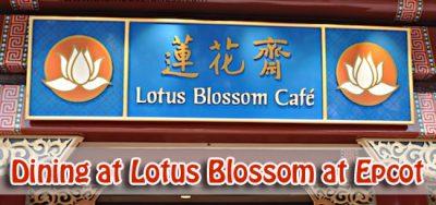 Dining at Lotus Blossom at Epcot