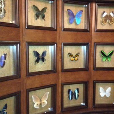 Skipper Canteen Butterflies