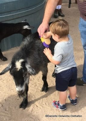 Toddler Brushing Goat at Rafiki's Planet Watch