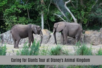 Review of Caring for Giants Tour at Disney's Animal Kingdom