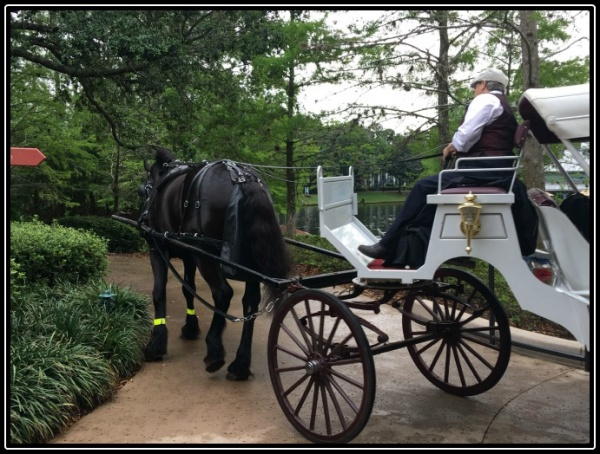 Slow down and enjoy a carriage ride at Port Orleans Riverside