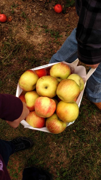 Magic Wishing Apples
