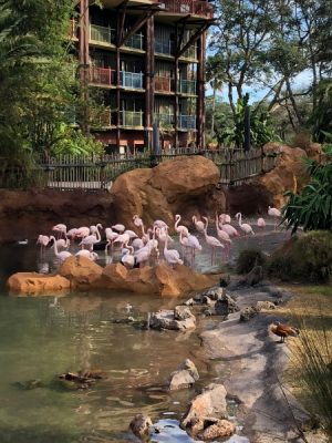 Flamingos at Animal Kingdom Lodge