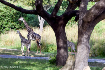 Top 10 Attractions Safari