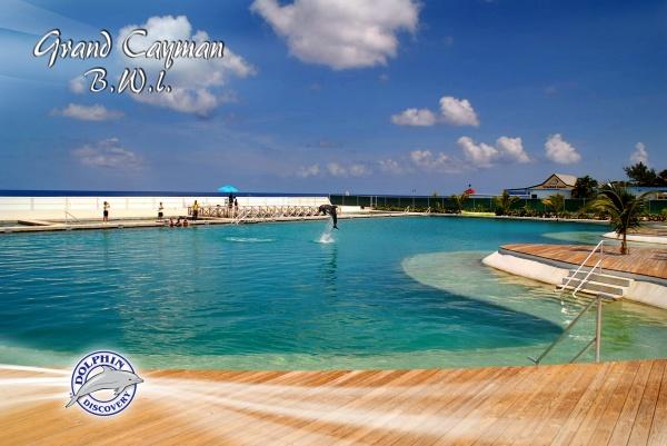 Grand Cayman Dolphin