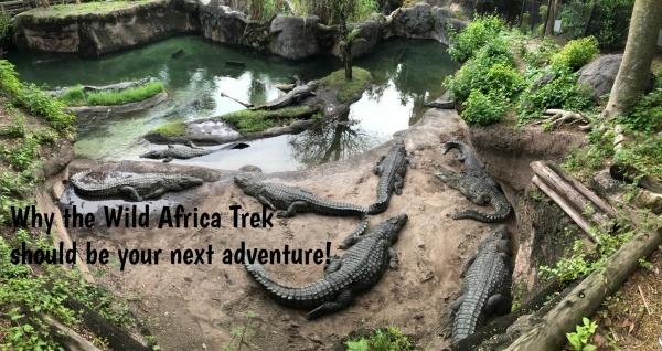 Wild Africa crocodiles pinnable