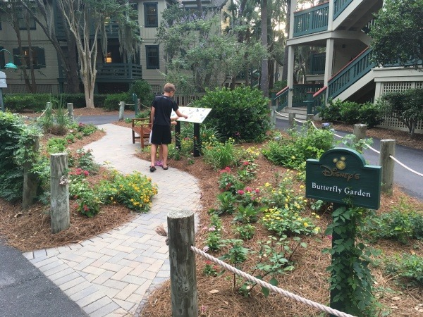 Butterfly Garden at Disney's Hilton Head Island Resort
