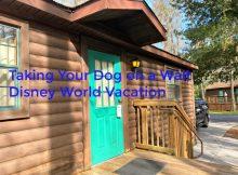Taking Your Dog on a Walt Disney World Vacation