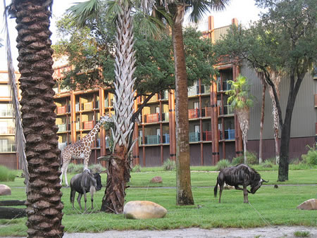 Animal Kingdom Lodge Animals