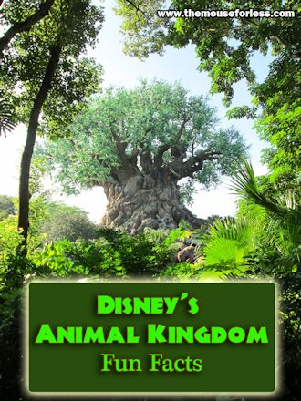Animal Kingdom Theme Park Fun Facts
