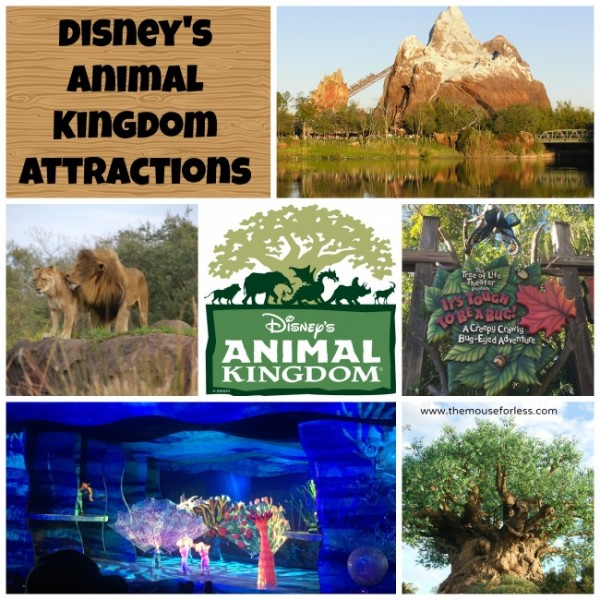 Animal Kingdom Theme Park attractions