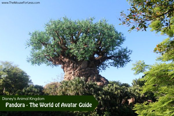 Pandora - The World of Avatar | Disney's Animal Kingdom Expansion Guide