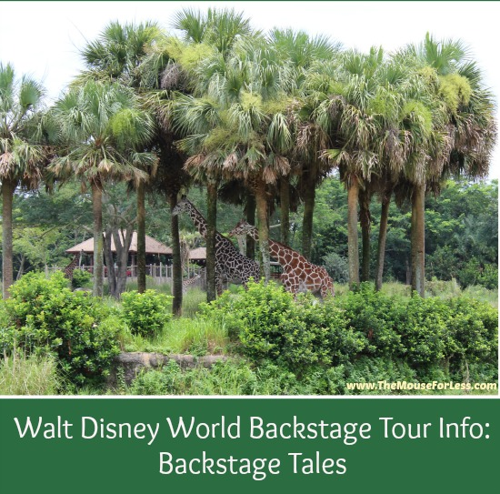 Backstage Tales Tour at Animal Kingdom